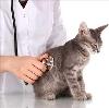 Ветеринарные клиники в Топках